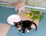 плюс котенок - минус зло